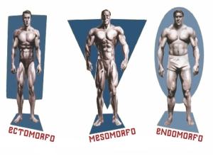 mesomorfo-ectomorfo-endomorfo2